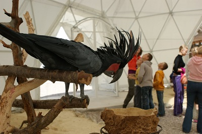 Попугай в «Динотерии Коктебель»