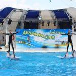 Дельфинарий «Коктебель»: лучший отдых для детей и взрослых