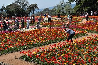 Парад тюльпанов в Никтском ботсаде