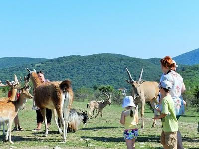 Парк антилоп «Сафари Ранч» фото