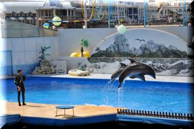 Дельфинарий в Артбухте Севастополь фото