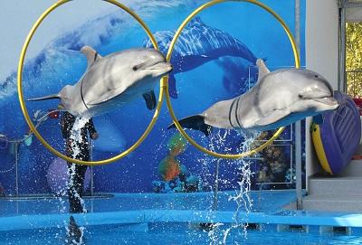 дельфинарий акварель фото 1