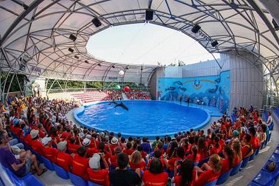 дельфинарий акварель фото