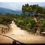 Можжевеловая роща — реликтовое урочище близ п. Новый Свет