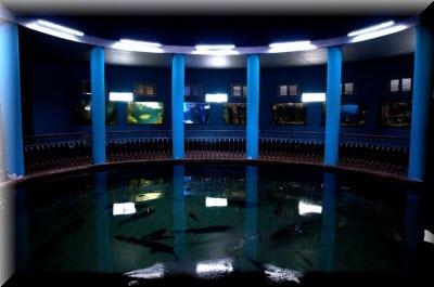 севастопольский аквариум музей