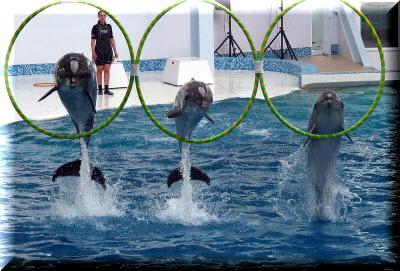 евпаторийский дельфинарий фото