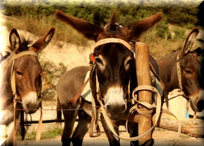 ослиная ферма бахчисарайский район