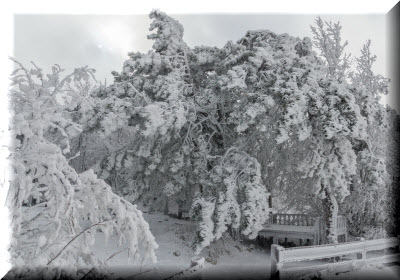 отдых на ай-петри в январе