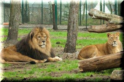 зоопарк в крыму тайган