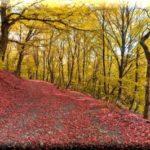 Агармышский лес — настоящее украшение горы Агармыш