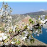 Крымский отдых в апреле: лечение, экскурсии, походы и не только