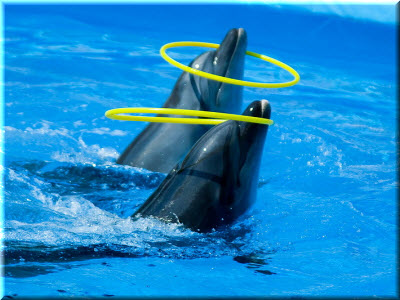дельфинарий немо в феодосии фото