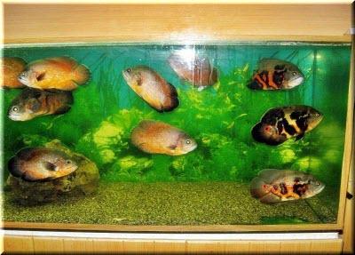 николаевка крым аквариум
