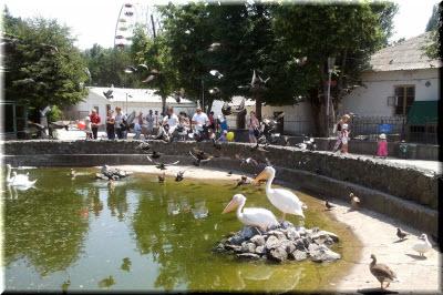 зоопарк симферополь фото