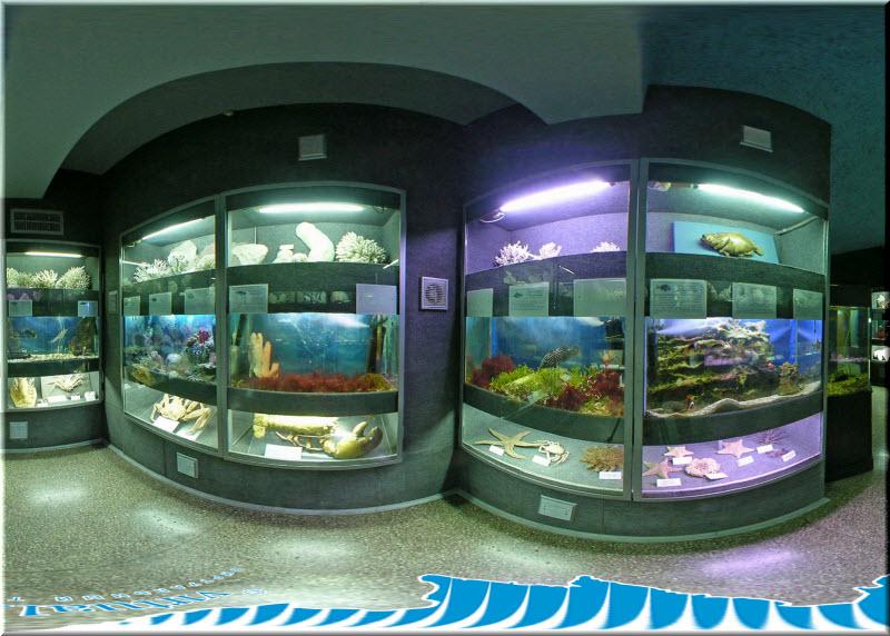 аквариум музей севастополь