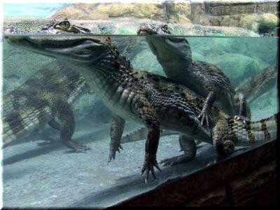 крокодиляриум в ялте фото