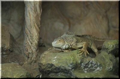 ящерицы на крокодиловой ферме ялты