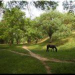 Ушакова балка — лучший городской парк Севастополя
