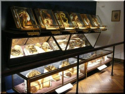 фото в Музее анатомии