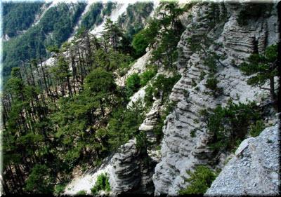 фото горно-лесного заказника в Ялте