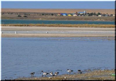 птицы на берегу Лимана