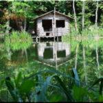 Черепашье озеро — дом красноухих черепах у Ай-Петри