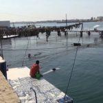Дельфинарий в Казачьей бухте — лучшее место для дельфинотерапии в Севастополе