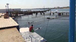 Дельфинарий в Севастополе в Казачьей бухте