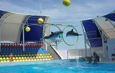 Прыжки дельфинов через кольца