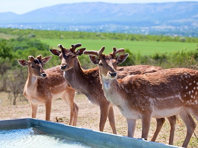 Парк антилоп «Сафари Ранч»