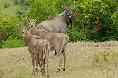Парк антилоп в Крыму фото