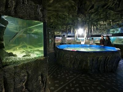 аквариум алушта