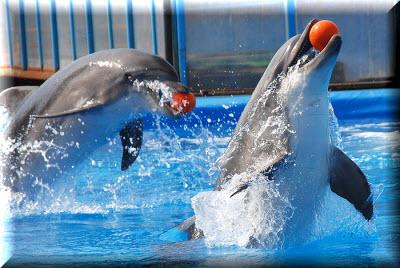 Дельфинарий в Артбухте Севастополь