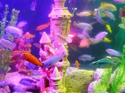Евпаторийский аквариум фото