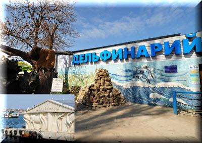Севастопольский дельфинарий фото
