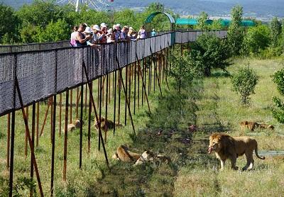 белогорск тайган парк