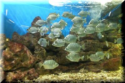 аквариум севастополь фото