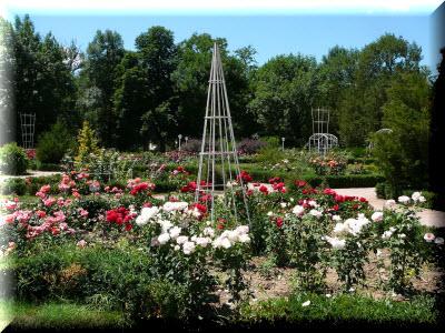 ботанический сад тну им в и вернадского