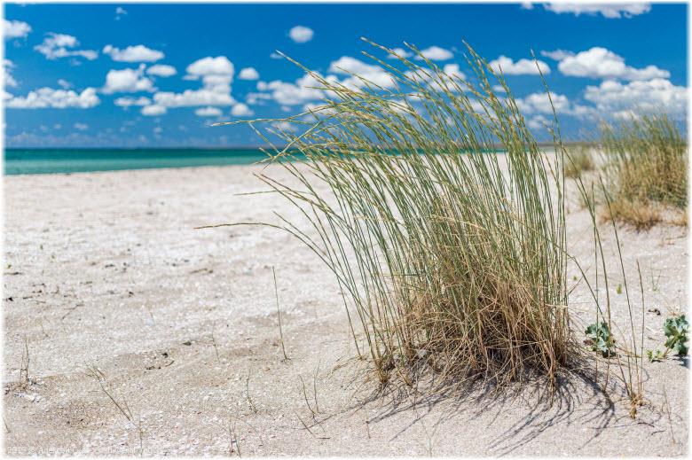 на пляже косы Беляус