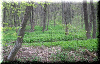 агармышский лес крым фото