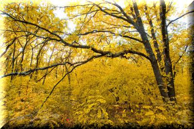агармышский лес в крыму