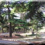 парк санатория ясная поляна ялта