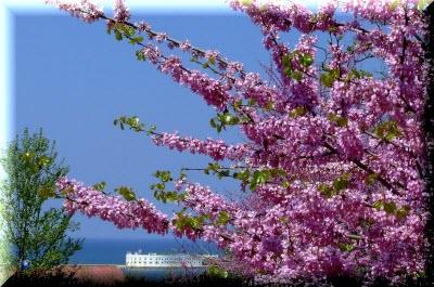 погода в крыму в апреле