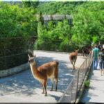 «Сказка» — ялтинский зоопарк с большим будущим