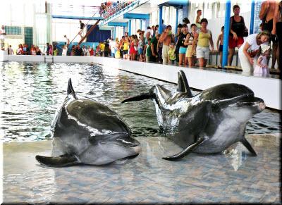 дельфинарий курортное крым
