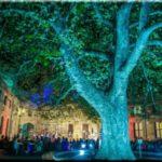 крым воронцовский дворец концерты 2017