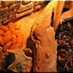 2017 ялтинский крокодиляриум анаконда отложила 12 яиц