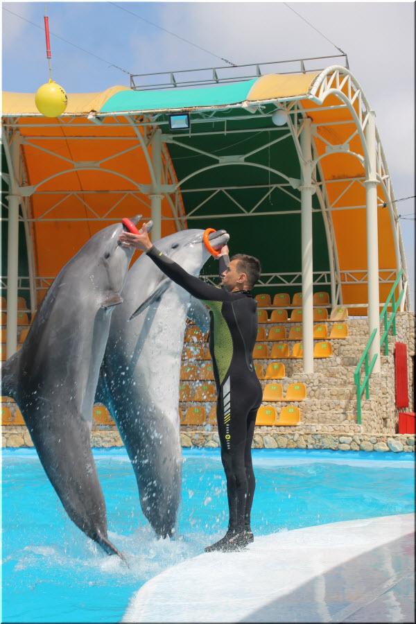 артисты Оленевского дельфинария