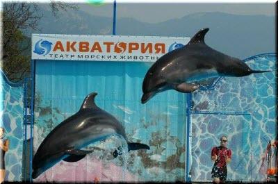 дельфины в Акватории