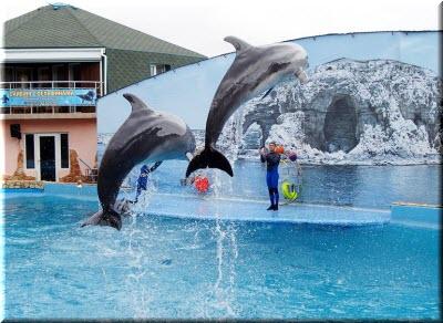 дельфины в Тарханкутском дельфинарии